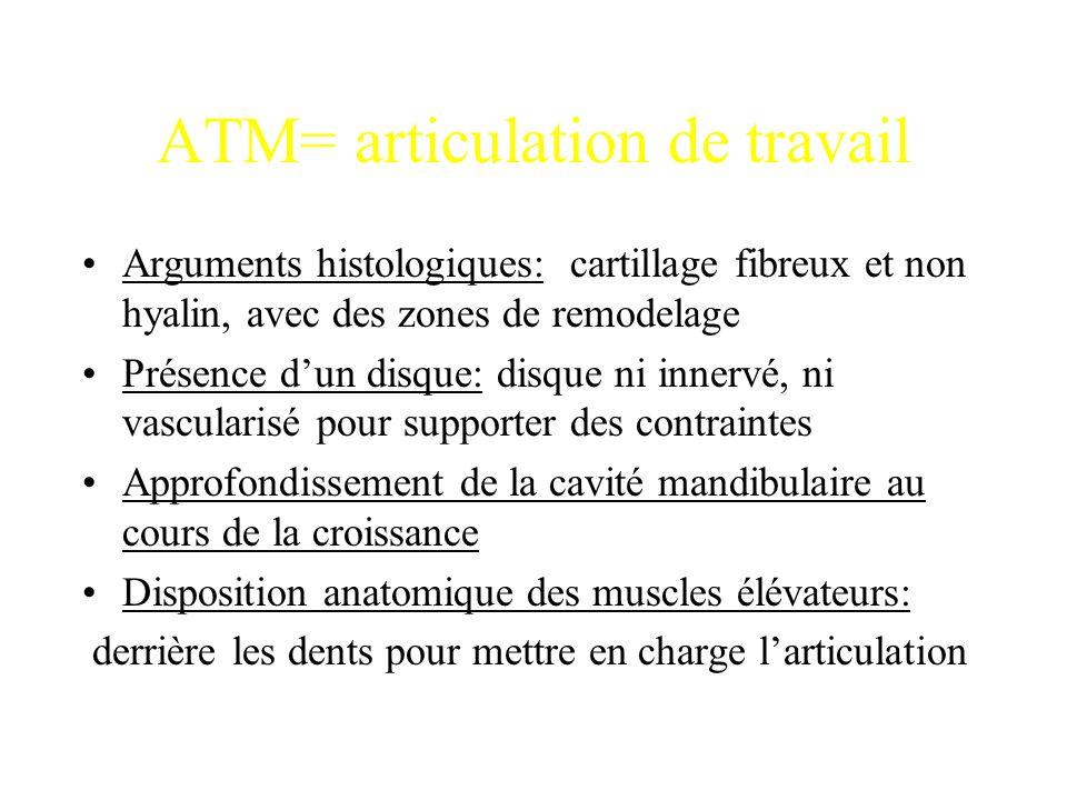 ATM= articulation de travail Arguments histologiques: cartillage fibreux et non hyalin, avec des zones de remodelage Présence d'un disque: disque ni i