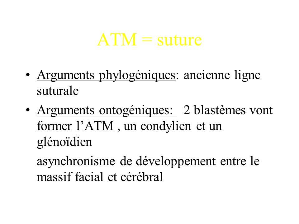 ATM = suture Arguments phylogéniques: ancienne ligne suturale Arguments ontogéniques: 2 blastèmes vont former l'ATM, un condylien et un glénoïdien asy