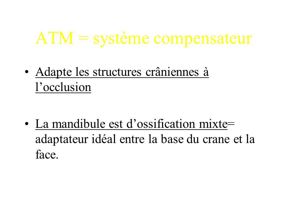 ATM = système compensateur Adapte les structures crâniennes à l'occlusion La mandibule est d'ossification mixte= adaptateur idéal entre la base du cra