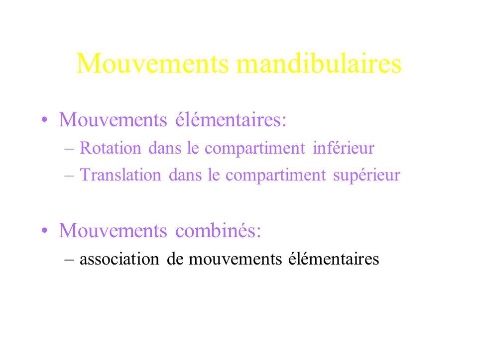 Mouvements mandibulaires Mouvements élémentaires: –Rotation dans le compartiment inférieur –Translation dans le compartiment supérieur Mouvements comb