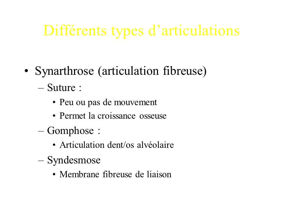 Différents types d'articulations Synarthrose (articulation fibreuse) –Suture : Peu ou pas de mouvement Permet la croissance osseuse –Gomphose : Articu