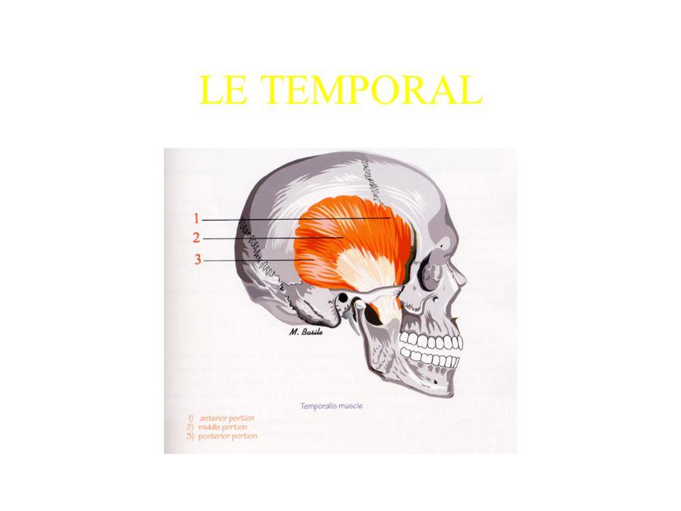LE TEMPORAL