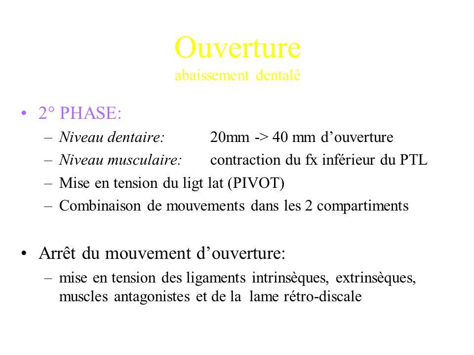 2° PHASE: –Niveau dentaire:20mm -> 40 mm d'ouverture –Niveau musculaire:contraction du fx inférieur du PTL –Mise en tension du ligt lat (PIVOT) –Combi