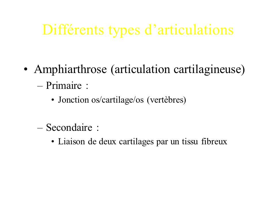 Différents types d'articulations Amphiarthrose (articulation cartilagineuse) –Primaire : Jonction os/cartilage/os (vertèbres) –Secondaire : Liaison de
