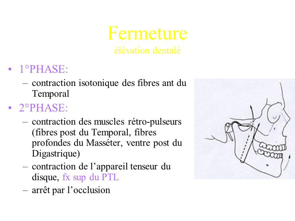 1°PHASE: –contraction isotonique des fibres ant du Temporal 2°PHASE: –contraction des muscles rétro-pulseurs (fibres post du Temporal, fibres profonde