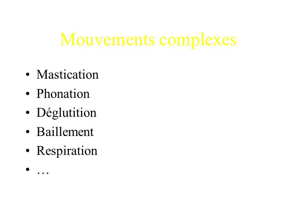 Mouvements complexes Mastication Phonation Déglutition Baillement Respiration …