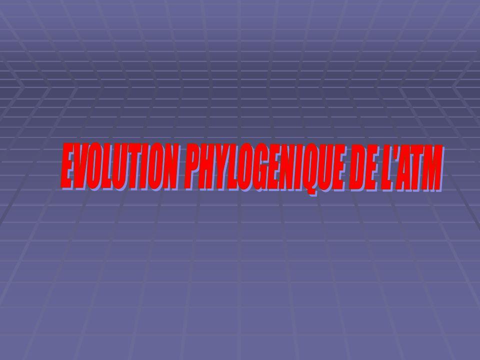  Type autodiastylique: par le processus orbitaire crânialement et le processus otique caudalement.pas de rapport avec l'arc hyoïdien.