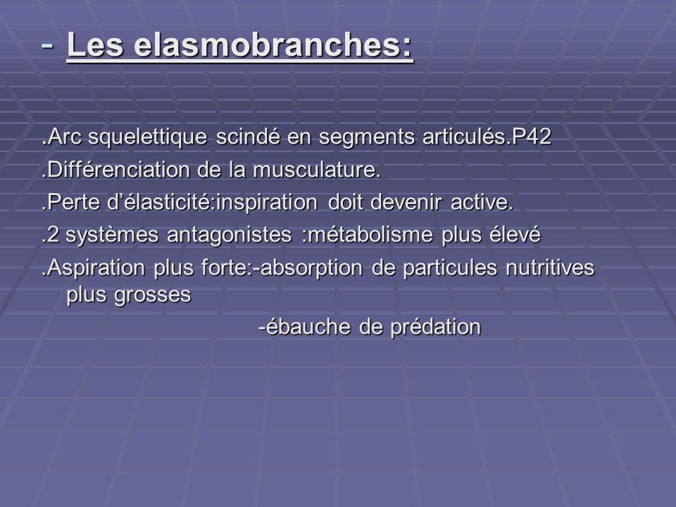 - Les elasmobranches:. Arc squelettique scindé en segments articulés.P42.Différenciation de la musculature..Perte d'élasticité:inspiration doit deveni