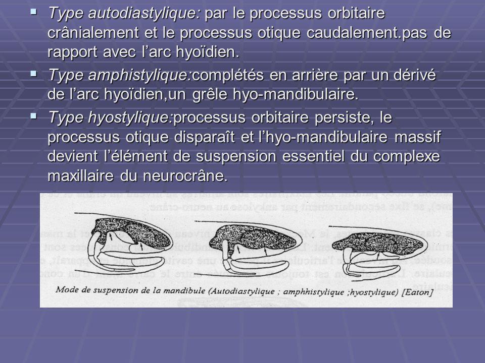  Type autodiastylique: par le processus orbitaire crânialement et le processus otique caudalement.pas de rapport avec l'arc hyoïdien.  Type amphisty
