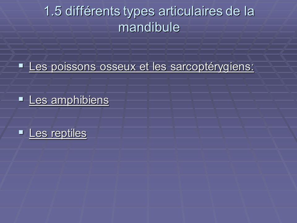 1.5 différents types articulaires de la mandibule  Les poissons osseux et les sarcoptérygiens:  Les amphibiens  Les reptiles
