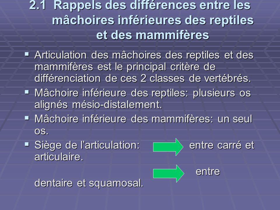 2.1 Rappels des différences entre les mâchoires inférieures des reptiles et des mammifères  Articulation des mâchoires des reptiles et des mammifères