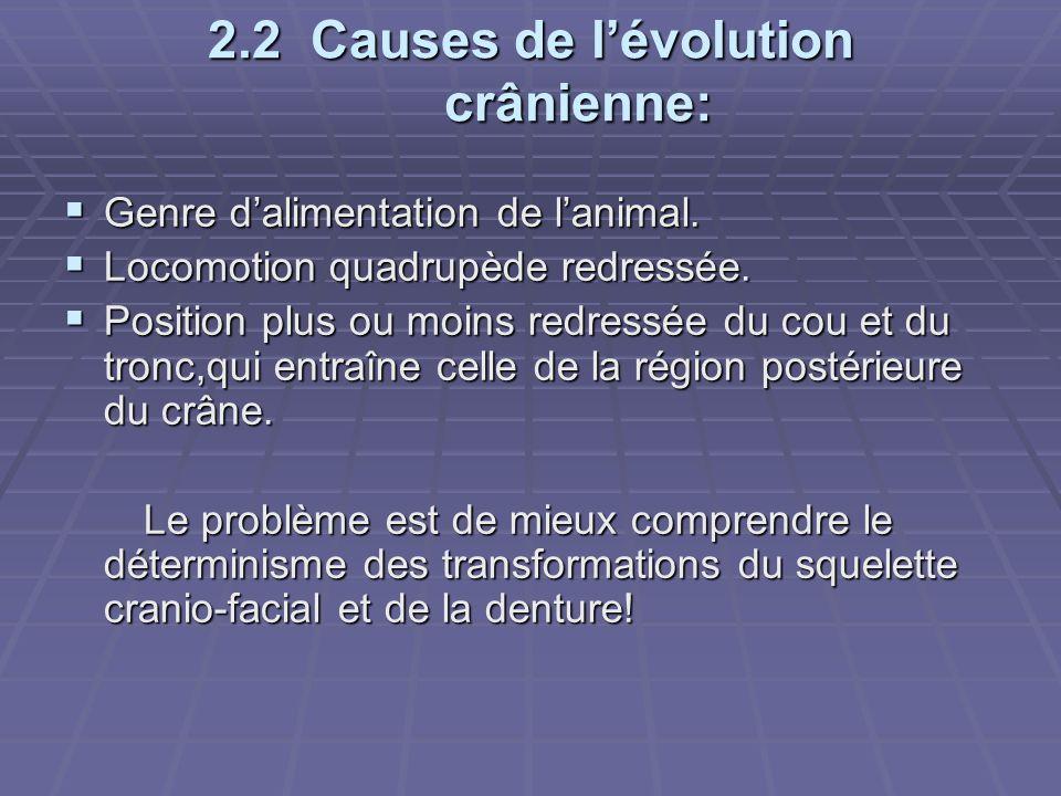 2.2 Causes de l'évolution crânienne:  Genre d'alimentation de l'animal.  Locomotion quadrupède redressée.  Position plus ou moins redressée du cou