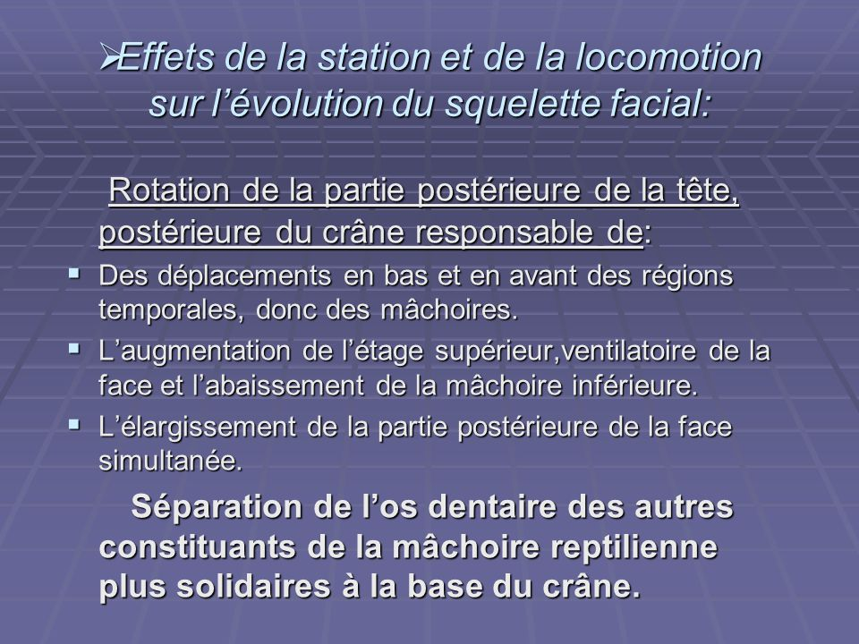 Effets de la station et de la locomotion sur l'évolution du squelette facial: Rotation de la partie postérieure de la tête, postérieure du crâne res