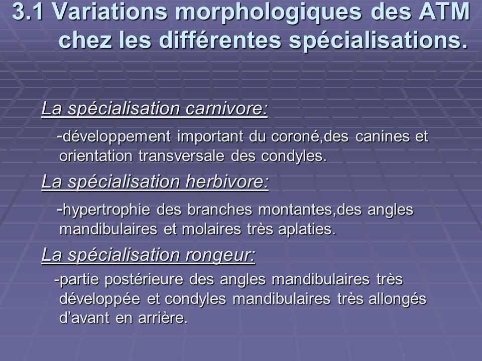3.1 Variations morphologiques des ATM chez les différentes spécialisations. La spécialisation carnivore: - développement important du coroné,des canin