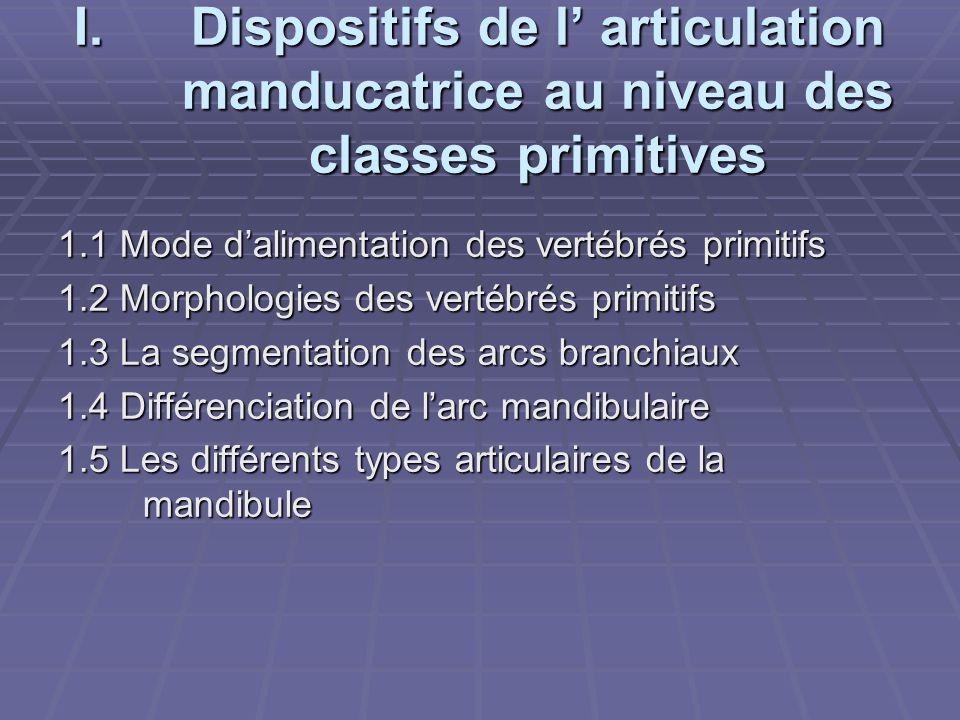 I.Dispositifs de l' articulation manducatrice au niveau des classes primitives 1.1 Mode d'alimentation des vertébrés primitifs 1.2 Morphologies des ve