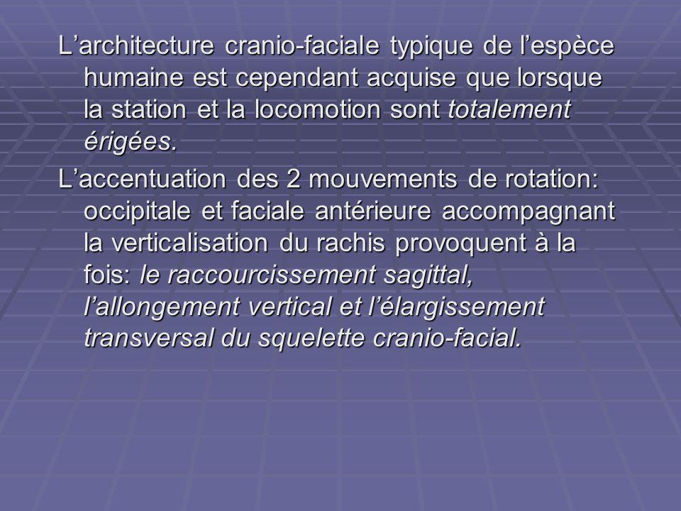 L'architecture cranio-faciale typique de l'espèce humaine est cependant acquise que lorsque la station et la locomotion sont totalement érigées. L'acc