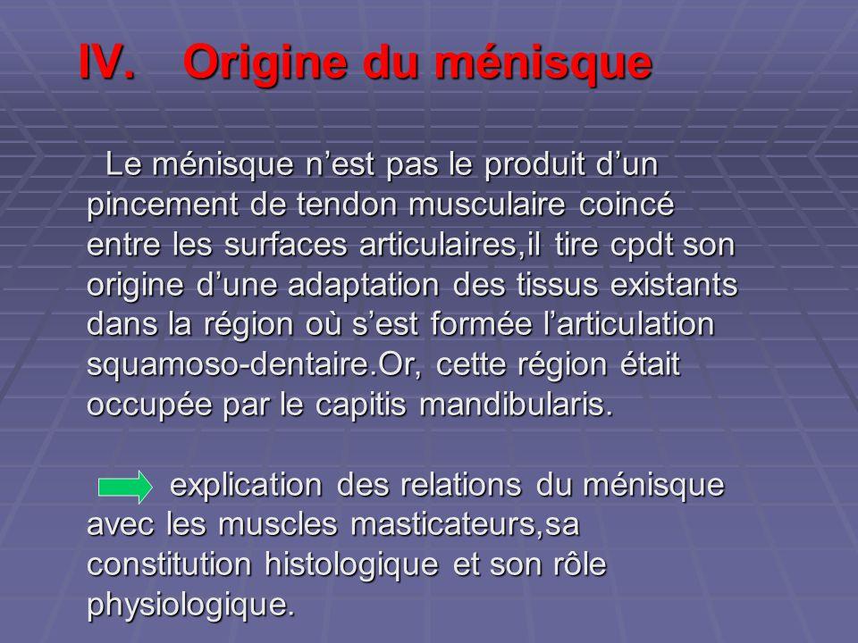IV.Origine du ménisque Le ménisque n'est pas le produit d'un pincement de tendon musculaire coincé entre les surfaces articulaires,il tire cpdt son or