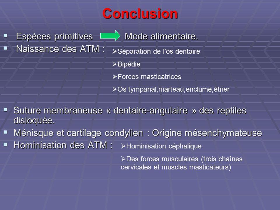 Conclusion  Espèces primitives Mode alimentaire.  Naissance des ATM :  Suture membraneuse « dentaire-angulaire » des reptiles disloquée.  Ménisque
