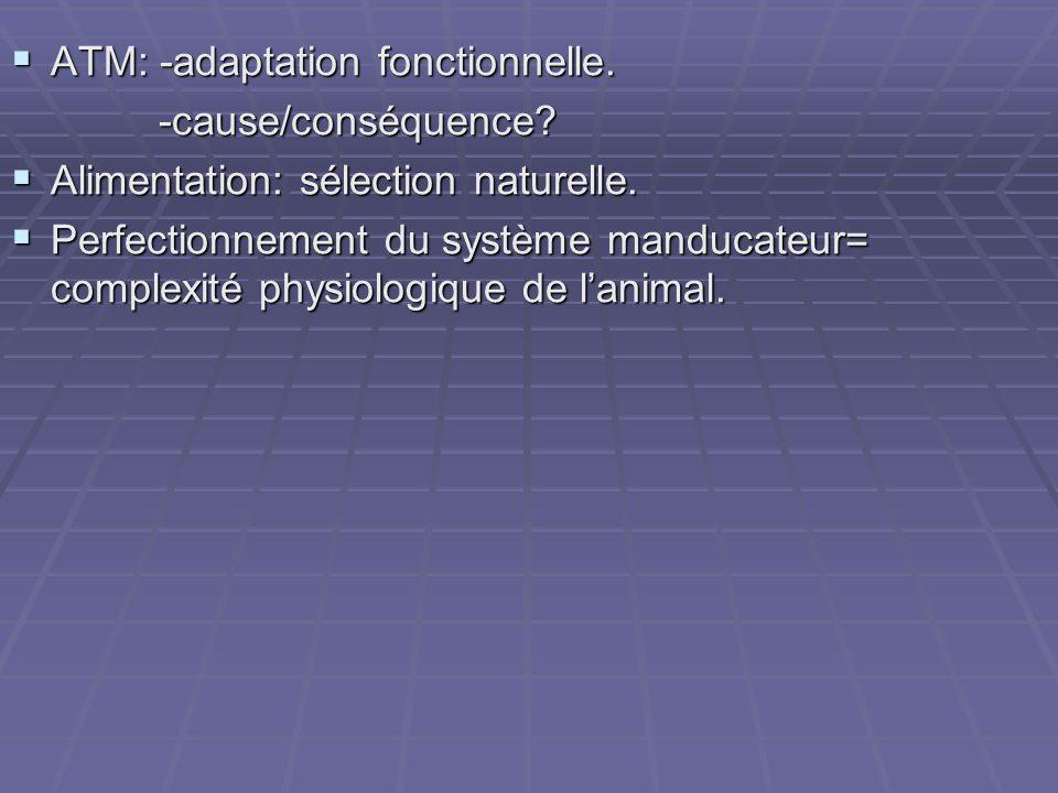  ATM: -adaptation fonctionnelle. -cause/conséquence? -cause/conséquence?  Alimentation: sélection naturelle.  Perfectionnement du système manducate