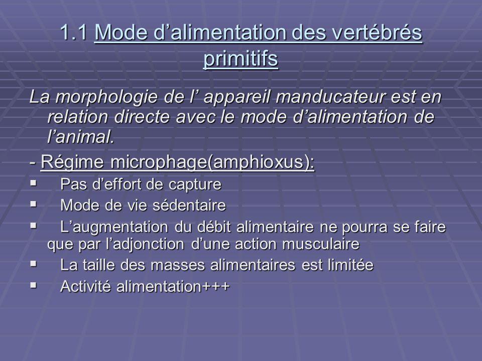 1.1 Mode d'alimentation des vertébrés primitifs La morphologie de l' appareil manducateur est en relation directe avec le mode d'alimentation de l'ani