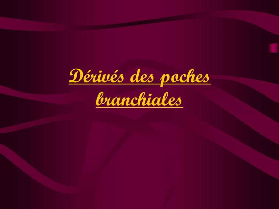 Dérivés des poches branchiales