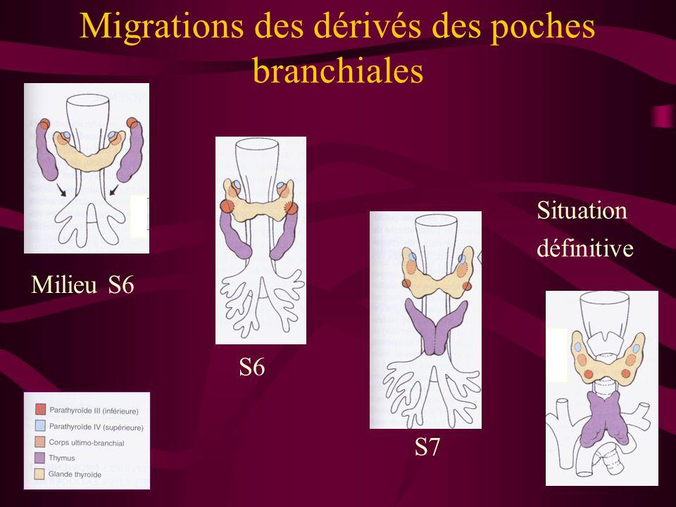 Migrations des dérivés des poches branchiales Milieu S6 Situation définitive S7 S6