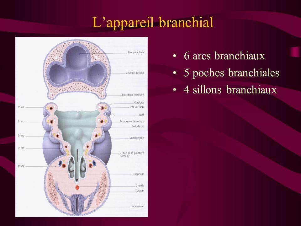 6 arcs branchiaux 5 poches branchiales 4 sillons branchiaux