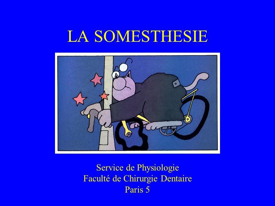 LA SOMESTHESIE Service de Physiologie Faculté de Chirurgie Dentaire Paris 5