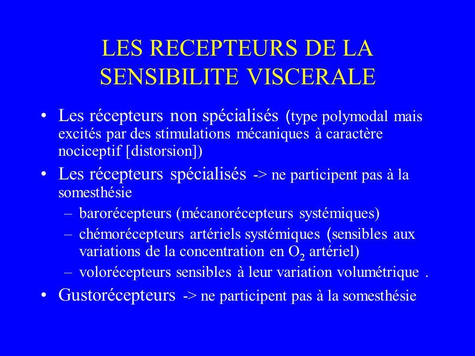 LES RECEPTEURS DE LA SENSIBILITE VISCERALE Les récepteurs non spécialisés ( type polymodal mais excités par des stimulations mécaniques à caractère nociceptif [distorsion]) Les récepteurs spécialisés -> ne participent pas à la somesthésie –barorécepteurs (mécanorécepteurs systémiques) –chémorécepteurs artériels systémiques ( sensibles aux variations de la concentration en O 2 artériel) –volorécepteurs sensibles à leur variation volumétrique.