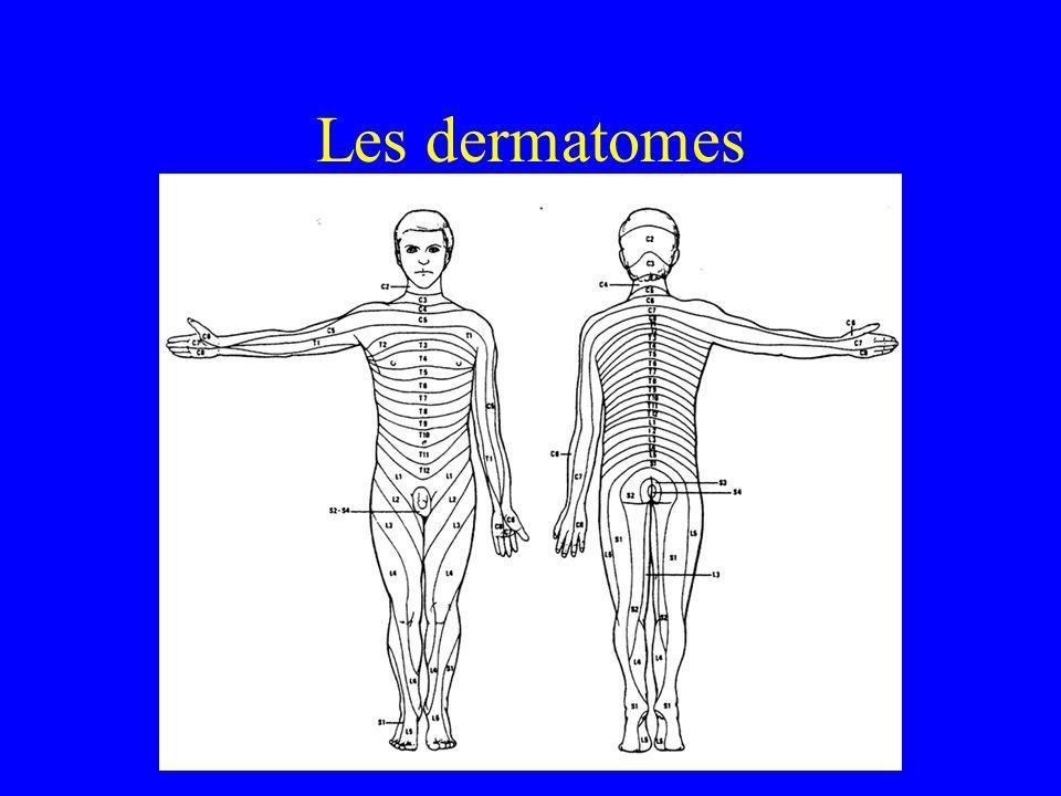 Les dermatomes