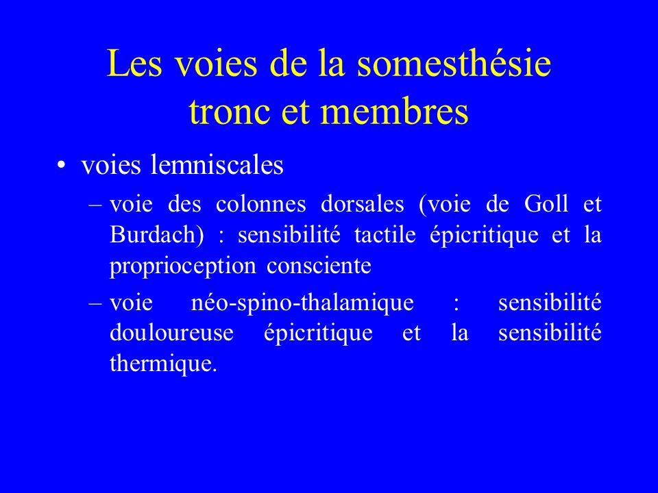 voies lemniscales –voie des colonnes dorsales (voie de Goll et Burdach) : sensibilité tactile épicritique et la proprioception consciente –voie néo-sp