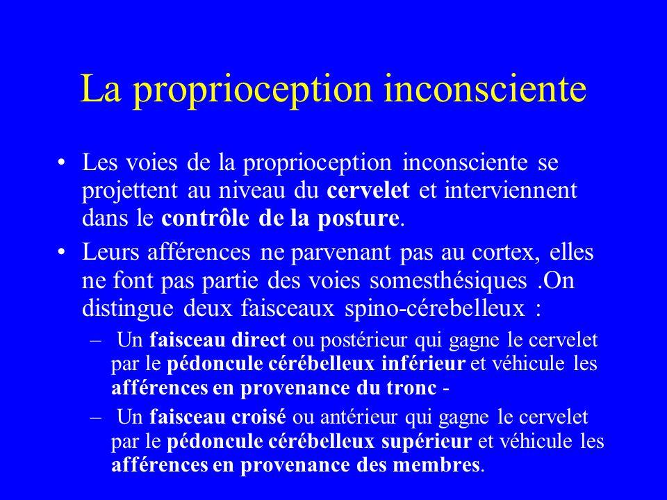 La proprioception inconsciente Les voies de la proprioception inconsciente se projettent au niveau du cervelet et interviennent dans le contrôle de la posture.