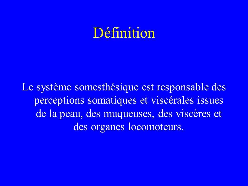 Définition Le système somesthésique est responsable des perceptions somatiques et viscérales issues de la peau, des muqueuses, des viscères et des organes locomoteurs.
