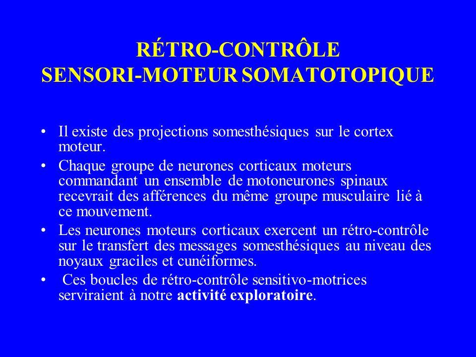 RÉTRO-CONTRÔLE SENSORI-MOTEUR SOMATOTOPIQUE Il existe des projections somesthésiques sur le cortex moteur. Chaque groupe de neurones corticaux moteurs