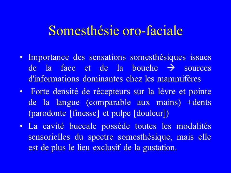 Somesthésie oro-faciale Importance des sensations somesthésiques issues de la face et de la bouche  sources d'informations dominantes chez les mammif