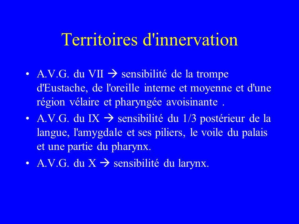 Territoires d'innervation A.V.G. du VII  sensibilité de la trompe d'Eustache, de l'oreille interne et moyenne et d'une région vélaire et pharyngée av