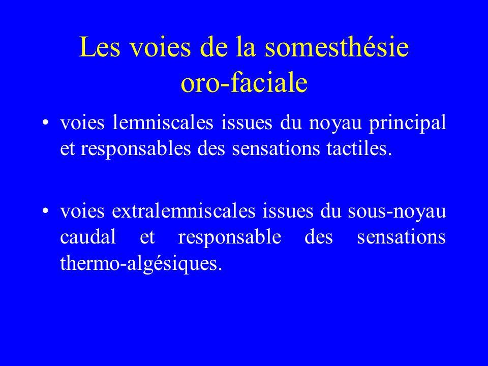Les voies de la somesthésie oro-faciale voies lemniscales issues du noyau principal et responsables des sensations tactiles.
