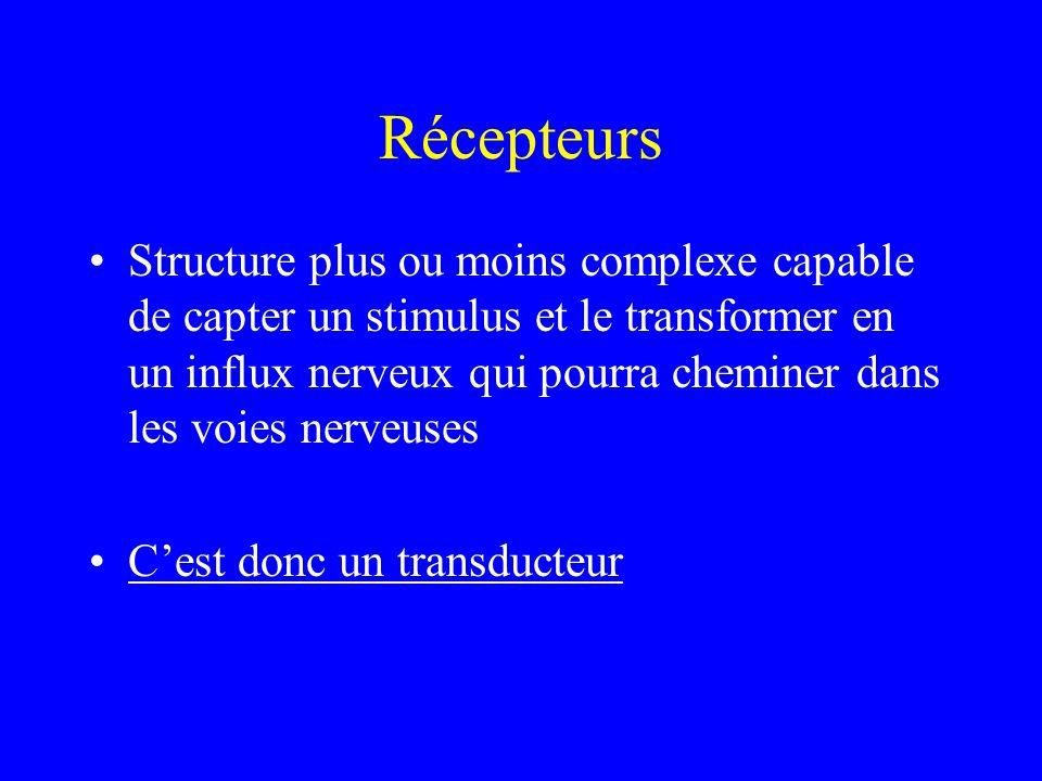 Récepteurs Structure plus ou moins complexe capable de capter un stimulus et le transformer en un influx nerveux qui pourra cheminer dans les voies nerveuses C'est donc un transducteur