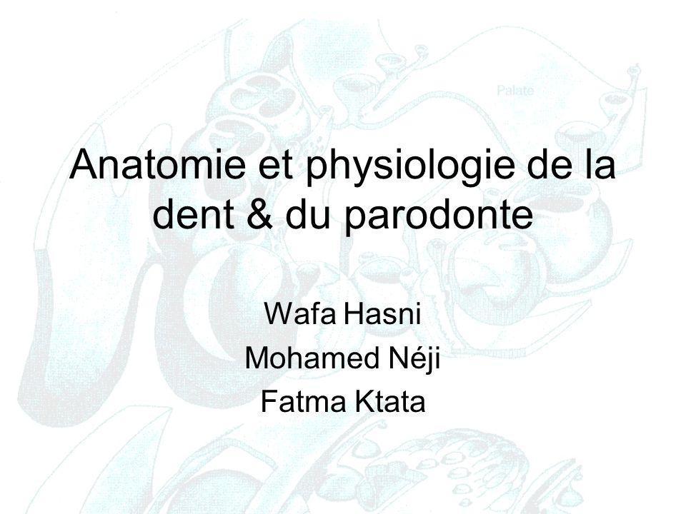 Anatomie et physiologie de la dent & du parodonte Wafa Hasni Mohamed Néji Fatma Ktata