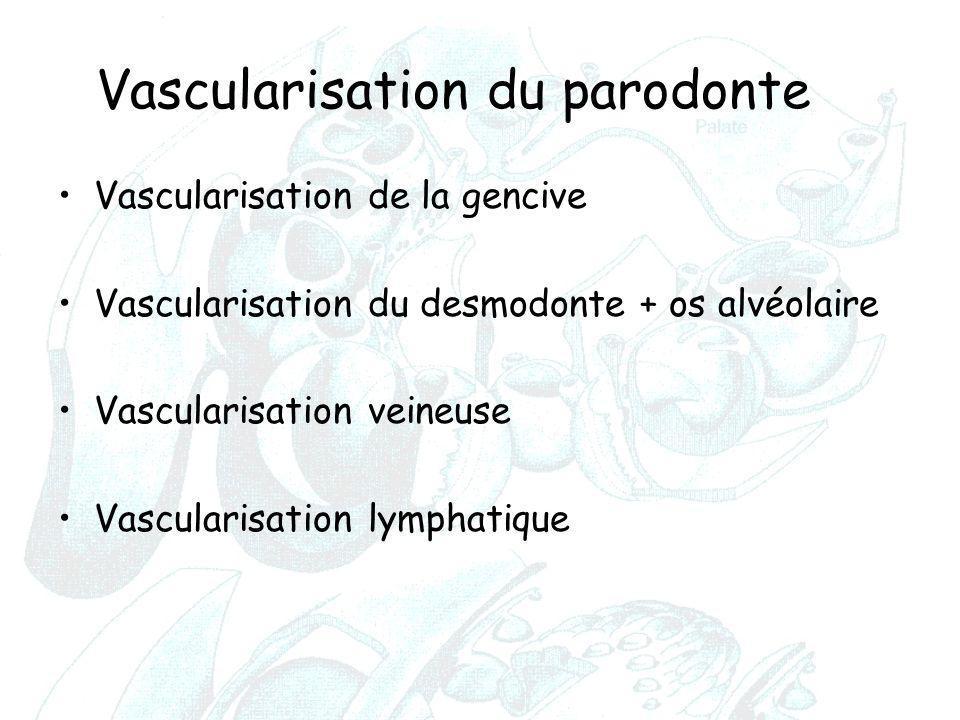 Vascularisation du parodonte Vascularisation de la gencive Vascularisation du desmodonte + os alvéolaire Vascularisation veineuse Vascularisation lymp