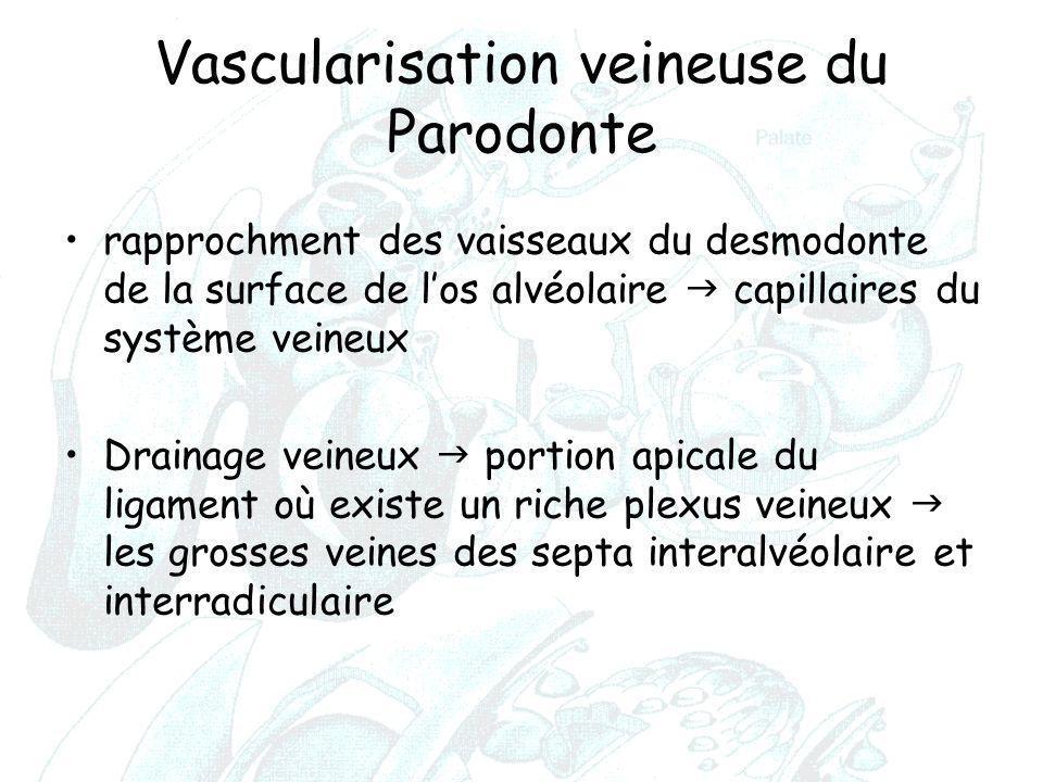 Vascularisation veineuse du Parodonte rapprochment des vaisseaux du desmodonte de la surface de l'os alvéolaire  capillaires du système veineux Drain