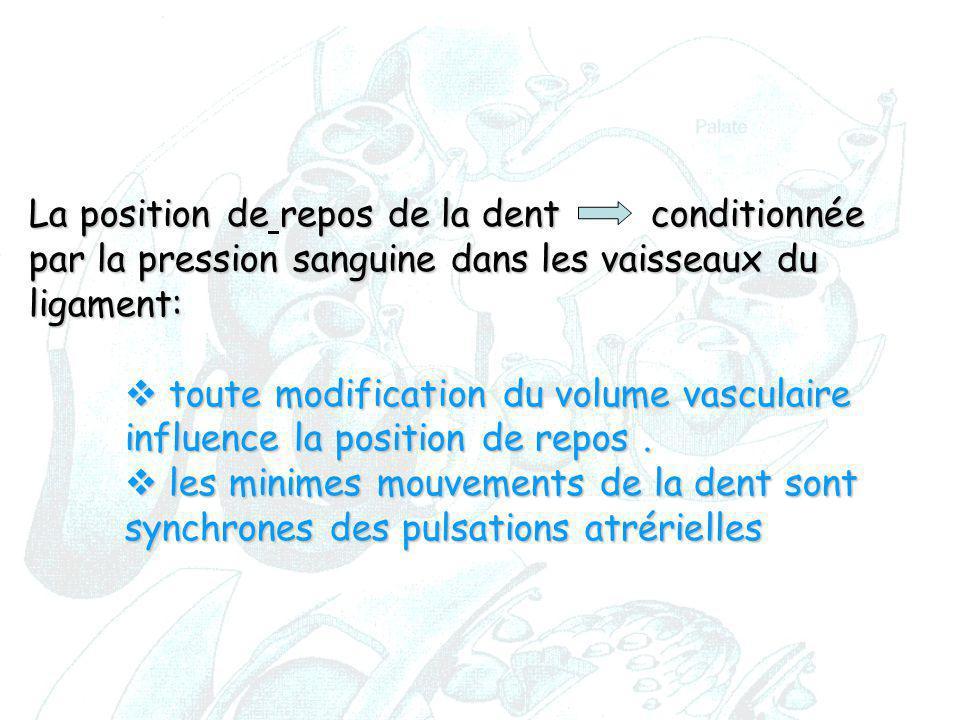 La position derepos de la dent conditionnée par la pression sanguine dans les vaisseaux du ligament: La position de repos de la dent conditionnée par