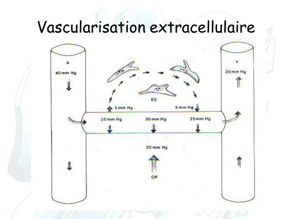 Vascularisation extracellulaire