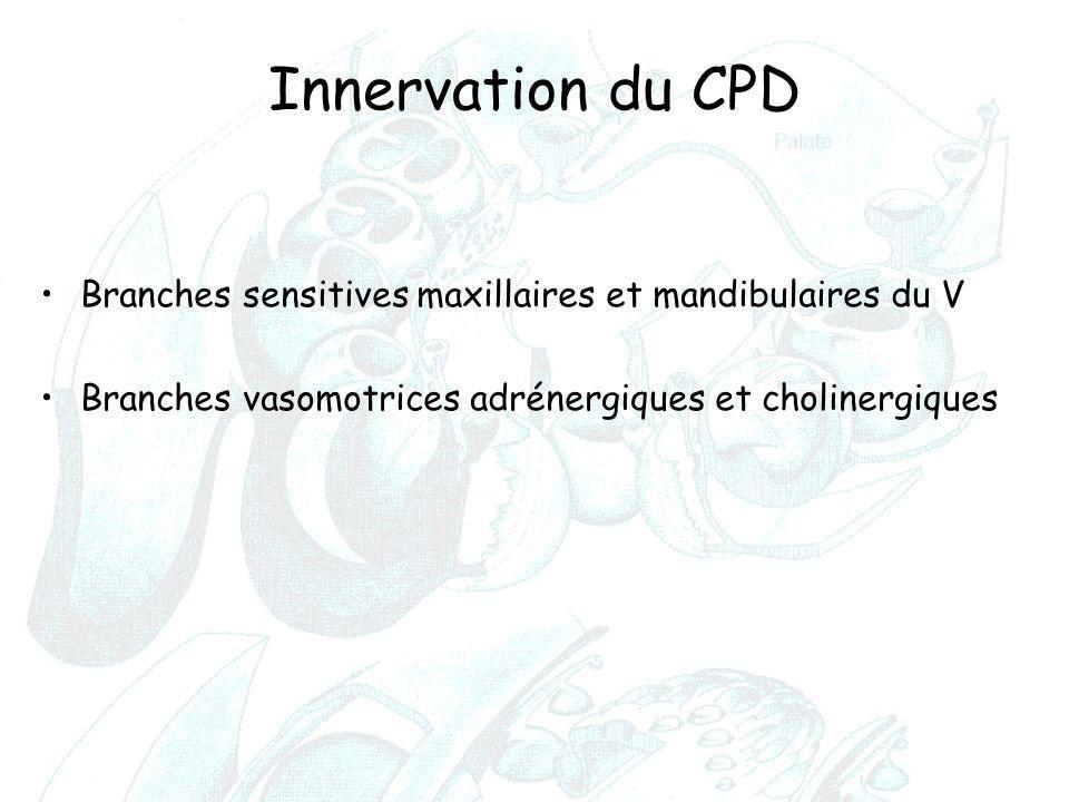 Innervation du CPD Branches sensitives maxillaires et mandibulaires du V Branches vasomotrices adrénergiques et cholinergiques