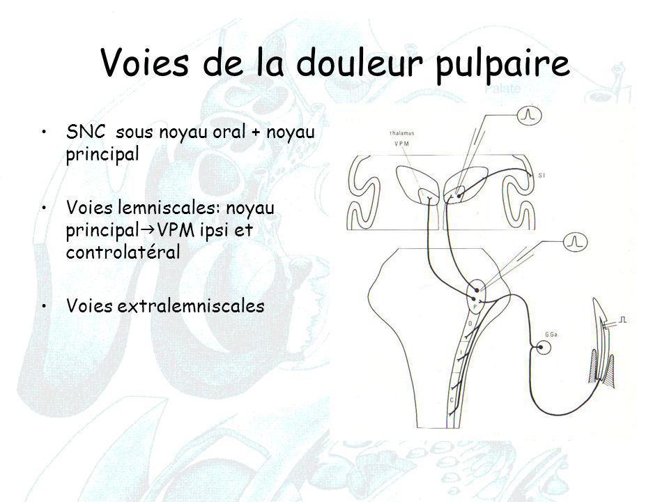 Voies de la douleur pulpaire SNC sous noyau oral + noyau principal Voies lemniscales: noyau principal  VPM ipsi et controlatéral Voies extralemniscal