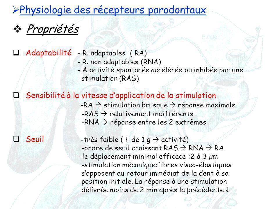  Physiologie des récepteurs parodontaux  Propriétés  Adaptabilité - R. adaptables ( RA) - R. non adaptables (RNA) - A activité spontanée accélérée
