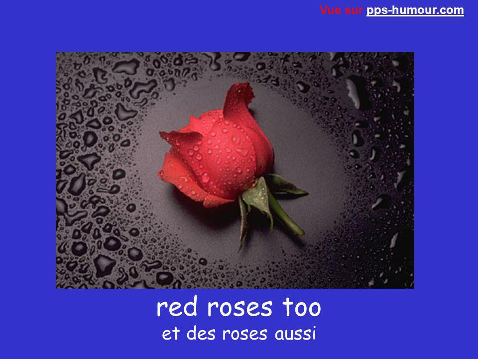 red roses too et des roses aussi Vue sur pps-humour.compps-humour.com