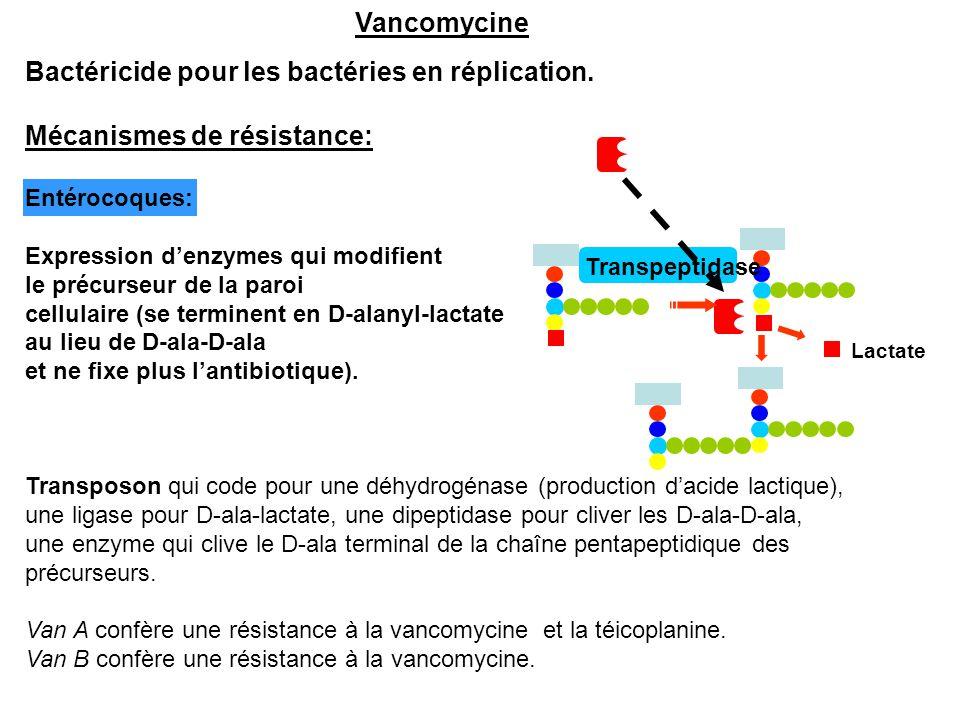 Vancomycine Bactéricide pour les bactéries en réplication. Mécanismes de résistance: Entérocoques: Expression d'enzymes qui modifient le précurseur de