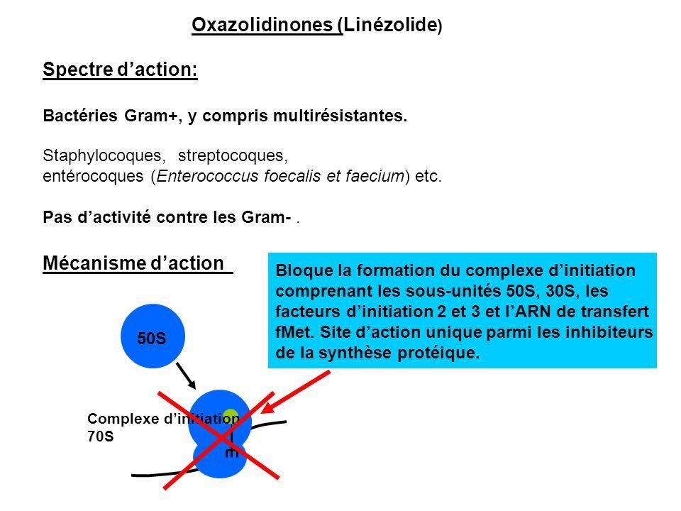 Oxazolidinones (Linézolide ) Spectre d'action: Bactéries Gram+, y compris multirésistantes. Staphylocoques, streptocoques, entérocoques (Enterococcus