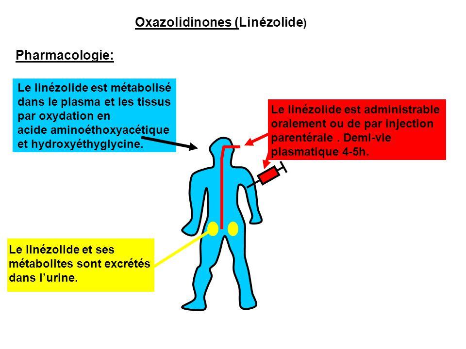 Pharmacologie: Le linézolide est métabolisé dans le plasma et les tissus par oxydation en acide aminoéthoxyacétique et hydroxyéthyglycine. Le linézoli